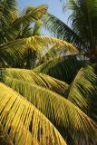 PalmsVert0343.jpg