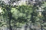 VeilOfLeaves2995.jpg