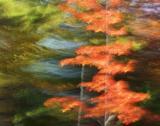 AutumnIgnites.jpg