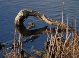 Log Reflections