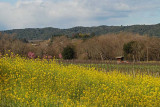 Healdsburg - Town and Wine Country
