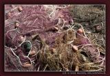 Sicily - Fishing Nets