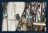 Corse, Old Glass Insulators in Porto Vecchio