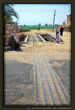 Track of the Sugar Cane Train