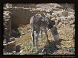 A donkey portrait instead