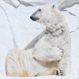 Professing Polar Bear