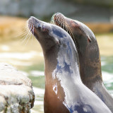 Sky Reflecting Seals
