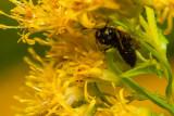 Wasp in Hiding