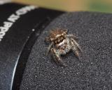 Jumping Spider Story Part - 1