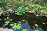 Our Pond 2006