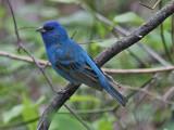 North Carolina Birding - May 2007