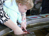 Touch a Starfish