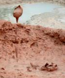 Mudscape