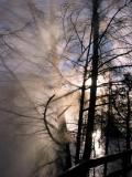 Steam swirls through the trees at Canary Spring