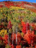 Idaho Palisades Fall Color