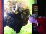 Kiss the Bison