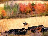 Birch Creek Roundup
