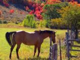 Bear Lake Horse and Maples