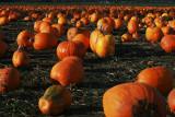 1Pumpkin Patch.jpg