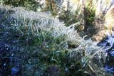 1Crystal Grass.jpg