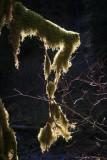 1Rainforest.jpg