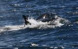 Orca Pals