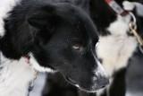 1Dinas Pup.jpg