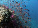 Fiji 2006 Underwater