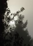 sun rising through mist