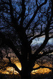 can never resist combinatio of tree shape and sunset colours