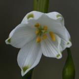 wildflowers - whites