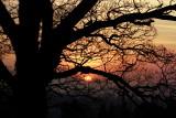 sunsoaked oak