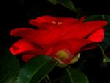 Awakening - Spring Bonsai