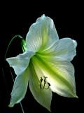 United States Botanical Garden v2.0