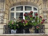 Rue Fenetre.jpg