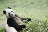 Chongqing Zoo, Xi'an 西安 - China (8) March 2009