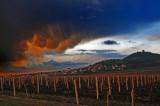 Vrsac vineyards