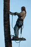 Palm Tree Trimmer