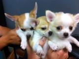 3 pups at 10 weeks old