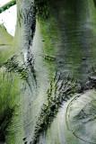 Artistic Tree Shapes