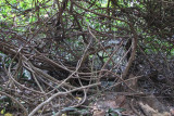A Tangle of Vines
