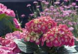 0310 05 Bunches of Flower.jpg