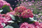 0310 06 Bunches of Flower 2.jpg