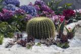 0310 07 Cactus.jpg