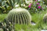 0310 08 Cactus 2.jpg