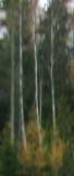 Autumn Impression #3