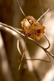 Pierced Brown Leaf