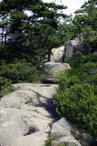 Mountain Trail Above Sand Beach