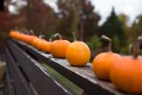 Baby Bear Pumpkins on the Railing