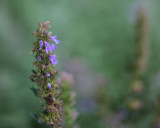 Something in the Herb Garden